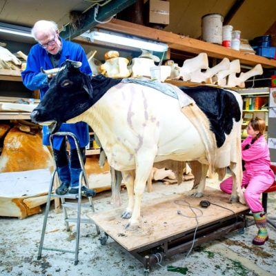 <strong>Koe Jantsje</strong><br><p>Preparateur Chris Walen en zijn assistent Janneke Vos, zijn bezig met het opzetten van koe Jantsje. Waarna zijn naar het landbouwmuseum gaat. - Triemen</p>